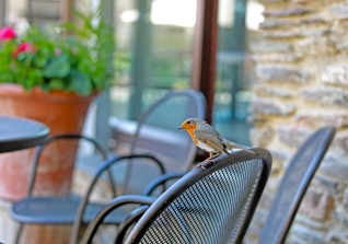 A Visiting Robin